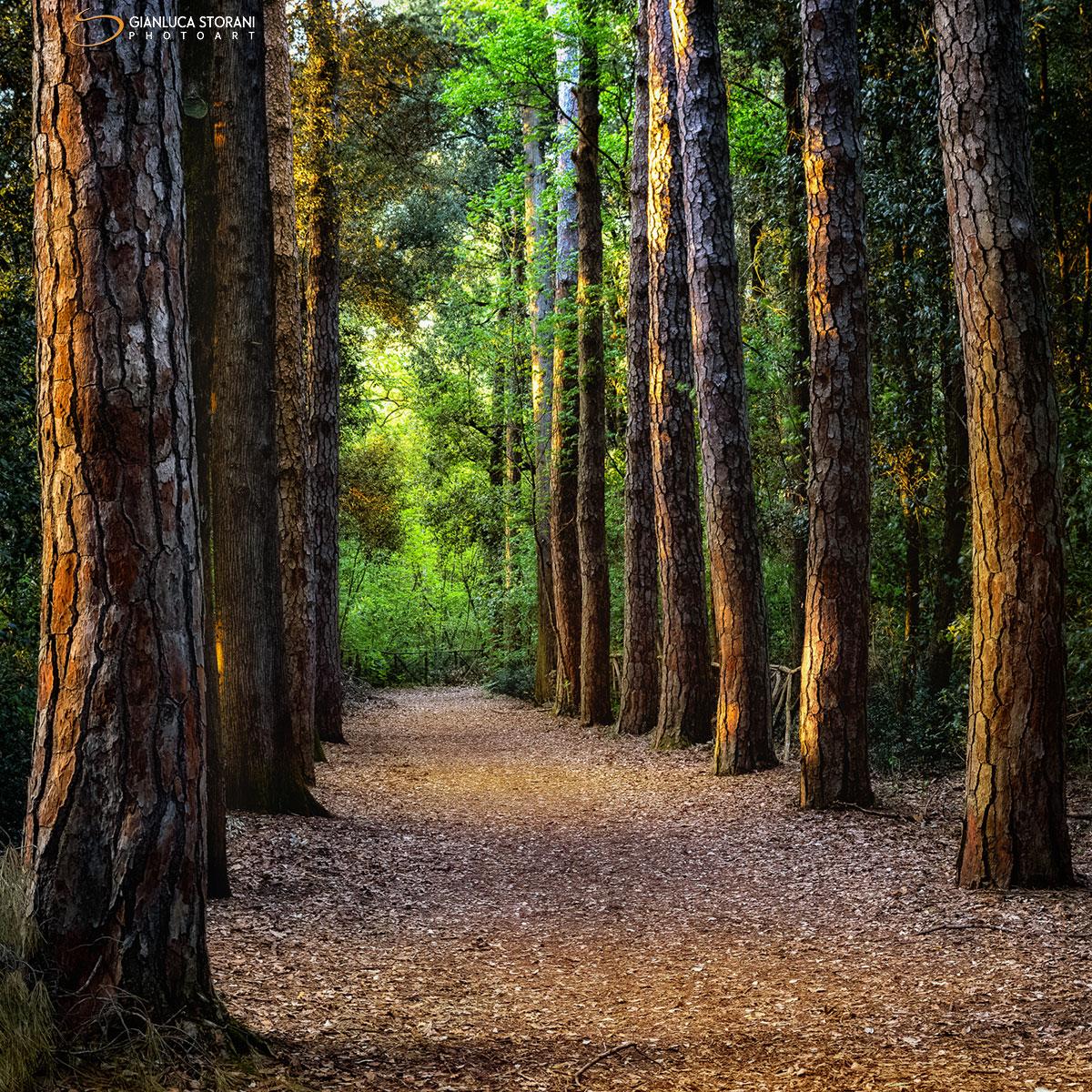 Nel bosco dell' Abbadia di Fiastra (ID: 3-6826)