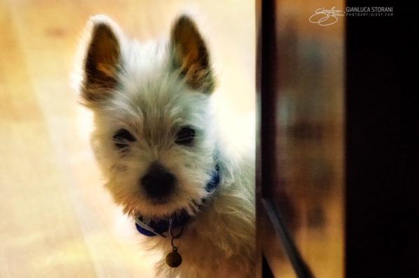 Il cagnolino Terry - Gianluca Storani Photo Art (ID: 4-5090)