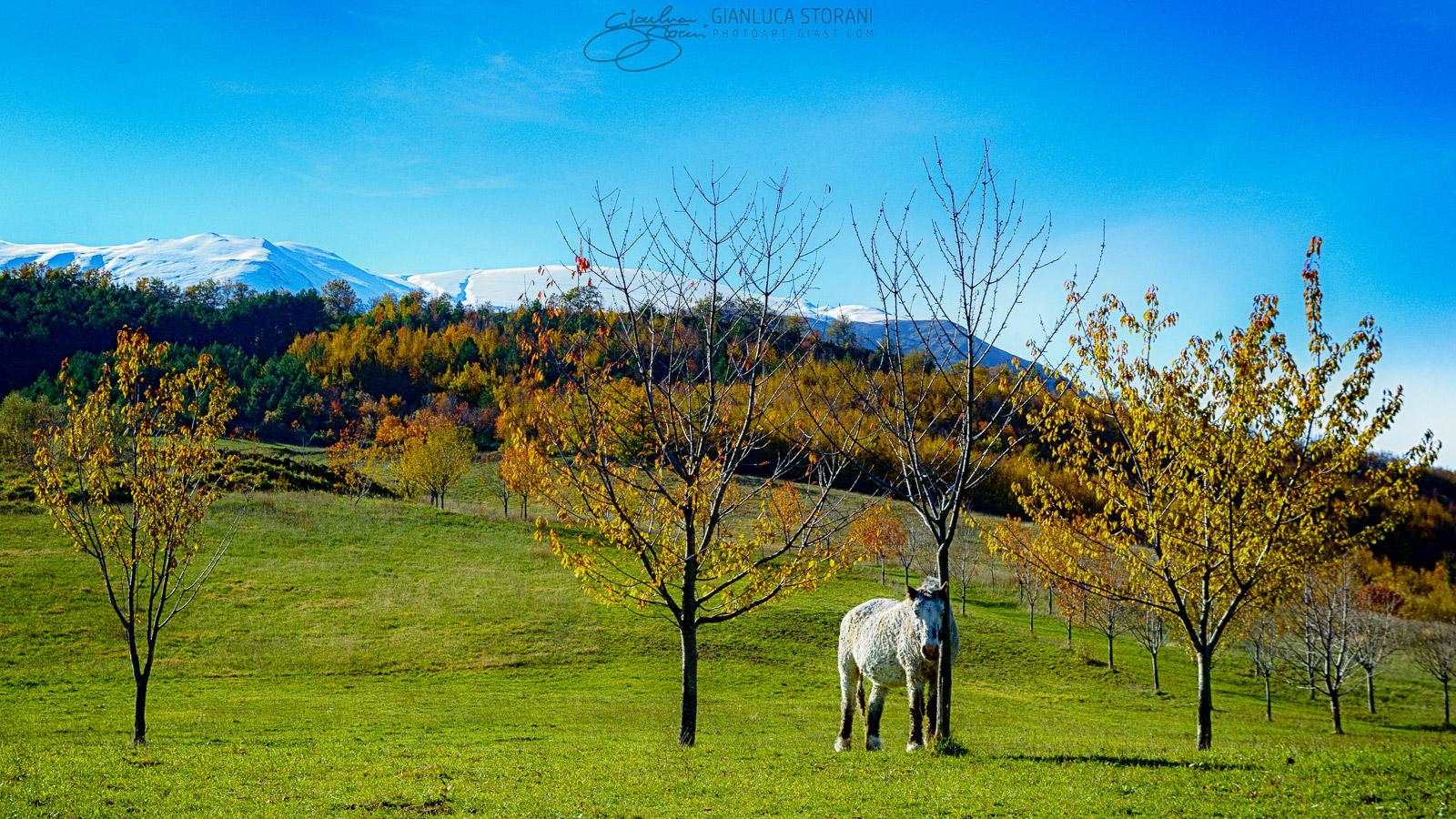 Scorcio d'autunno sui Sibillini - Gianluca Storani Photo Art (ID: 4-6112)