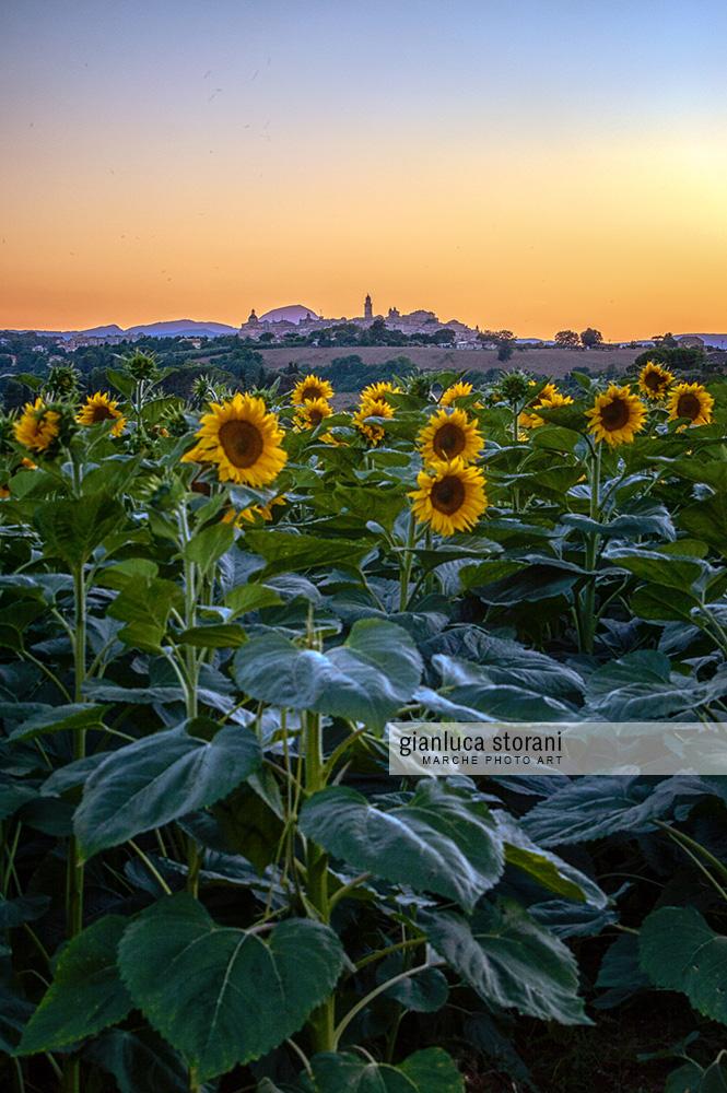 Sogno di fine estate - Gianluca Storani Photo Art (ID: 5-2498)