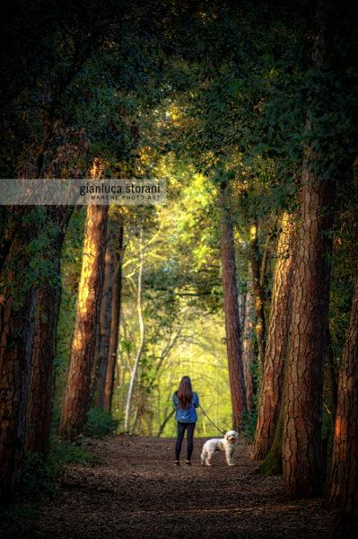Woods of time - Gianluca Storani Photo Art (ID: 5-0408)