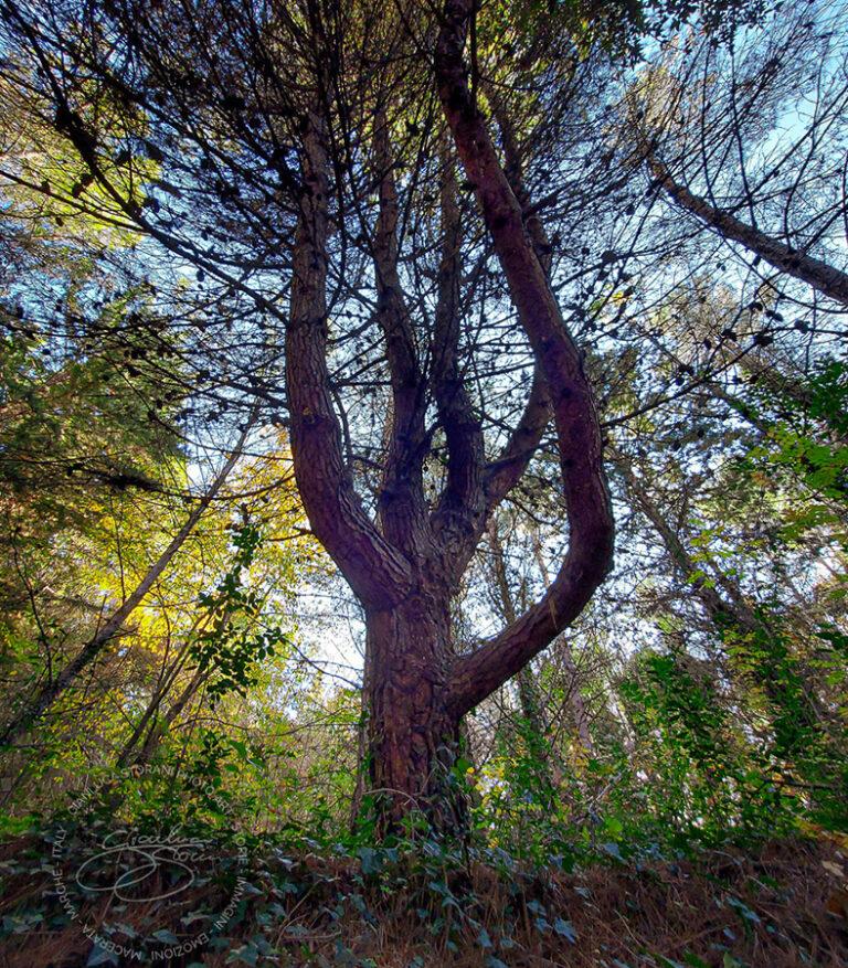 Un albero tra i sentieri del bosco urbano