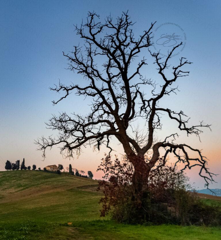 Un albero spoglio in una sera d'inverno