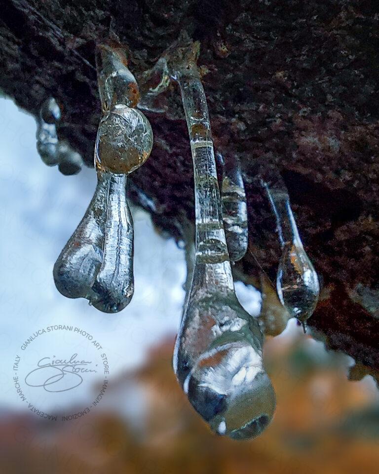Gocce di resina scendono da un albero