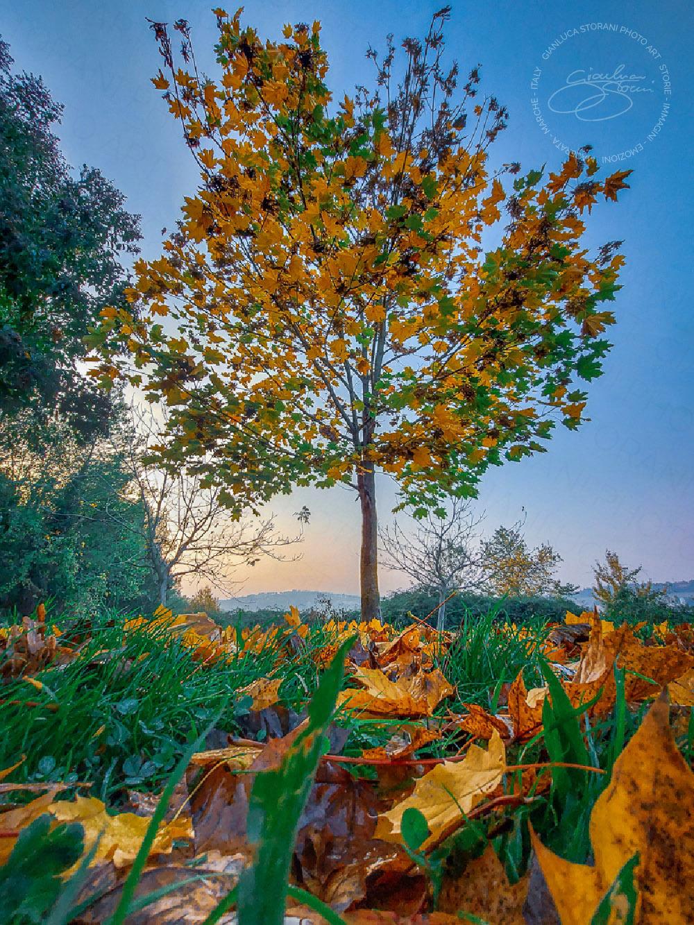 Tra le foglie d'autunno cadute in terra