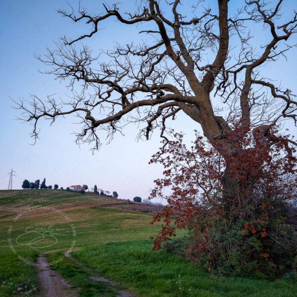 Un albero spoglio di campagna