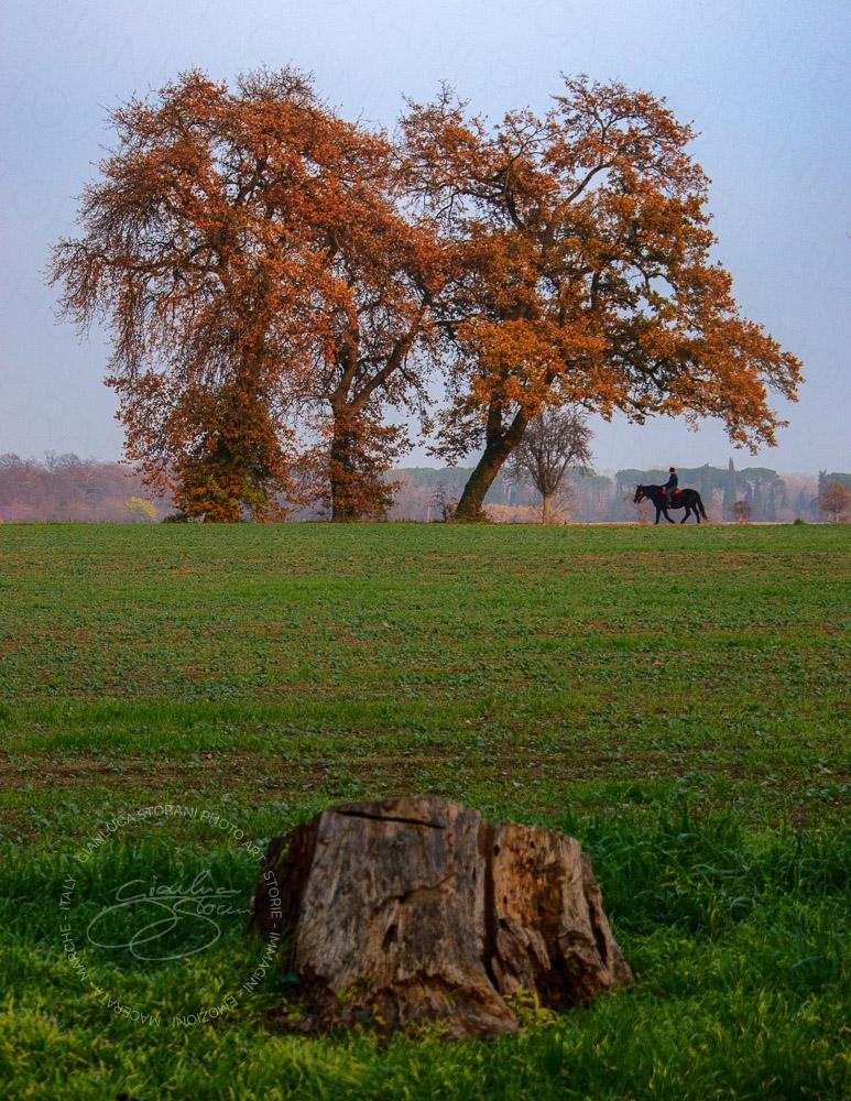 Un uomo a cavallo passeggia sotto un grande albero