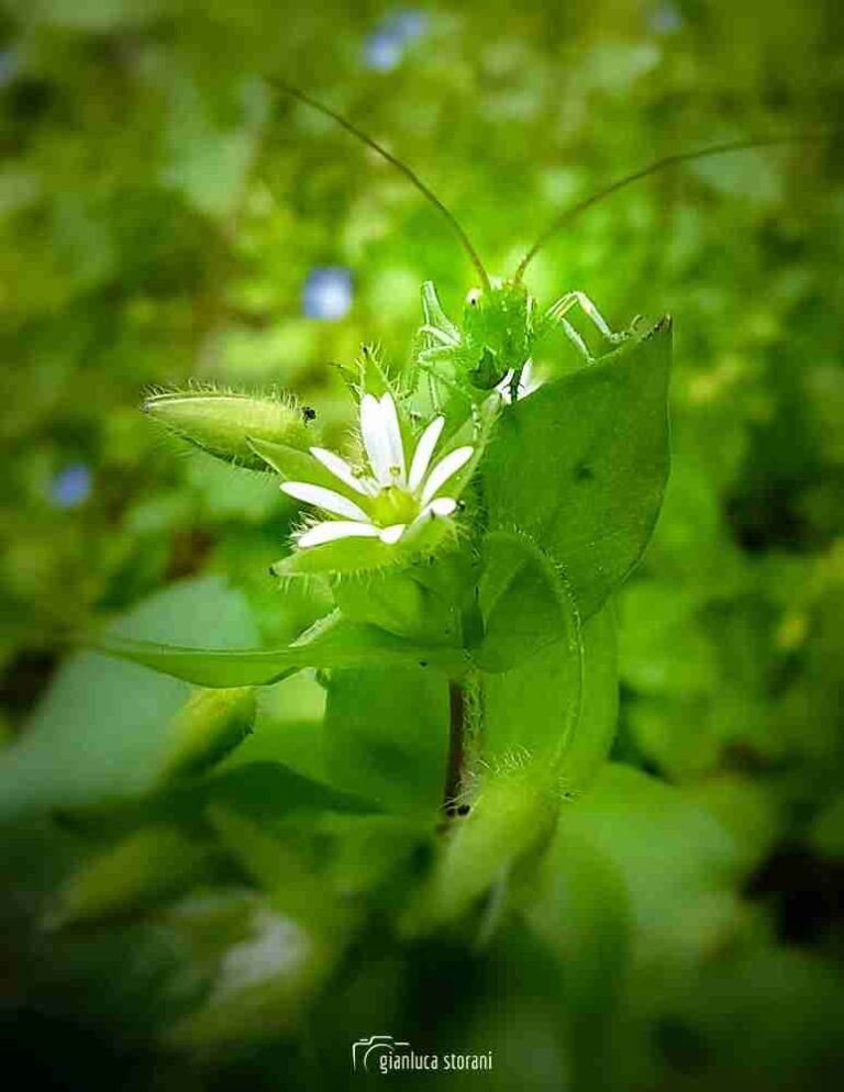 Un piccolissimo animaletto verde si nasconde nella vegetazione