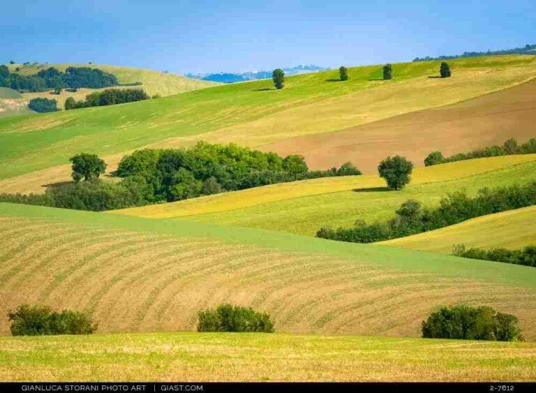Lo splendore dei colli maceratesi a inizio estate
