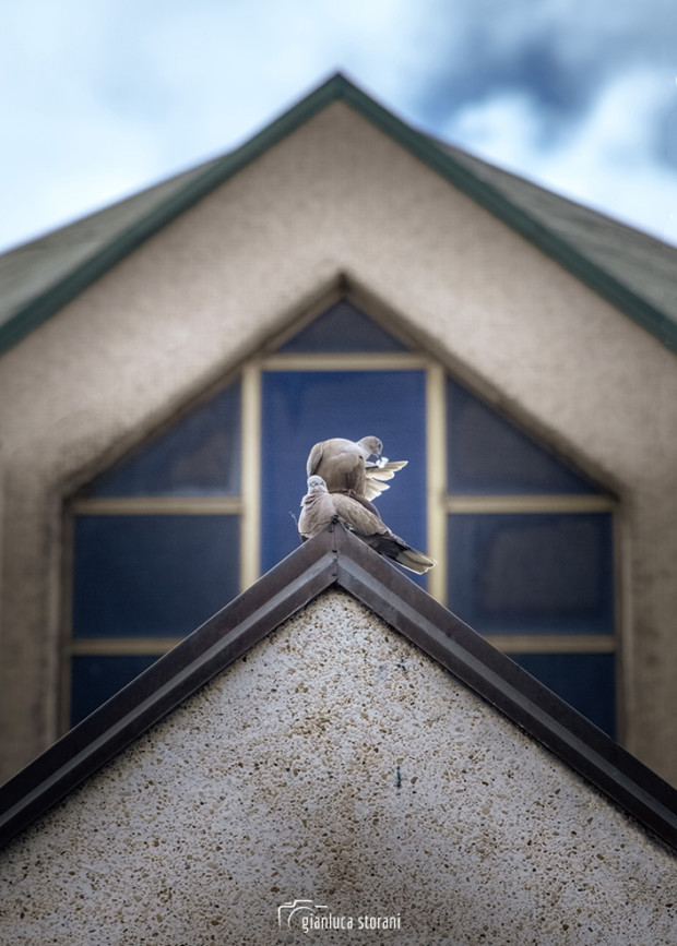 Come colombe in posa - Gianluca Storani Photo Art (Cod. 7-4738)