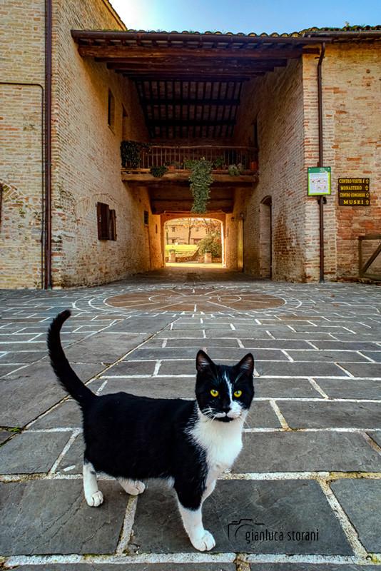 Il gattuccio dell'Abbadia - Gianluca Storani Photo Art (Cod: 6-8958)
