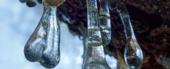 Gocce di resina di un albero