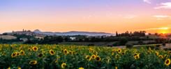 I colori di luglio - Gianluca Storani Photo Art (ID: 1-2268)